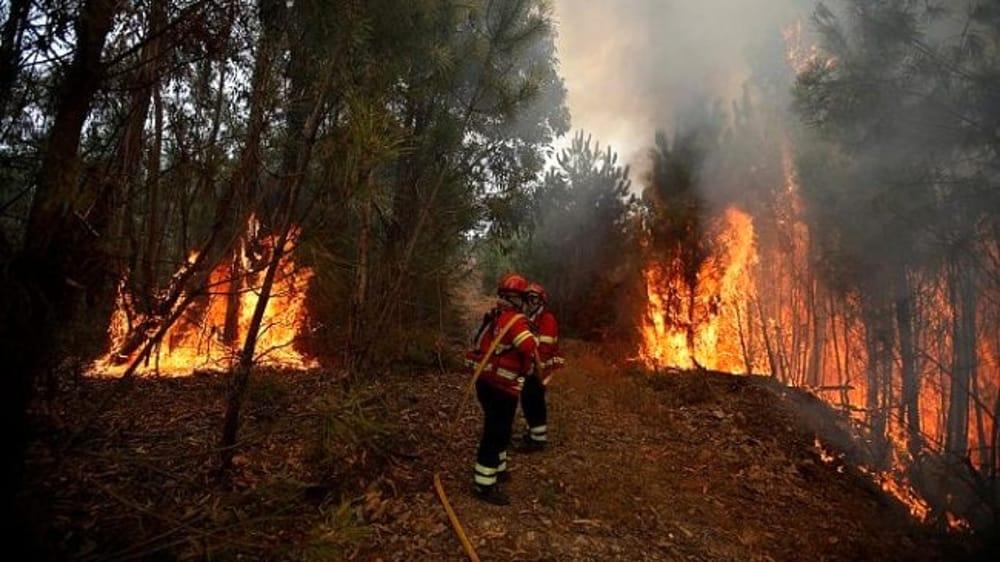 Cacciatori incendiano bosco in provincia di Caserta